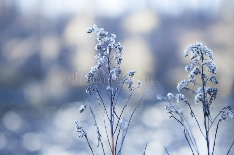 Close-up snow-covered bloemen op vage de winterachtergrond royalty-vrije stock foto's