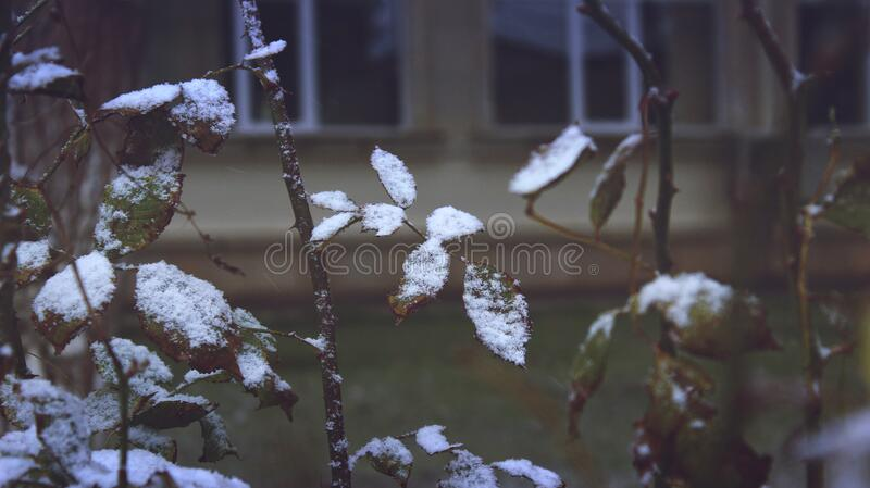 Close-up Of Snow On Plants During Winter Free Public Domain Cc0 Image