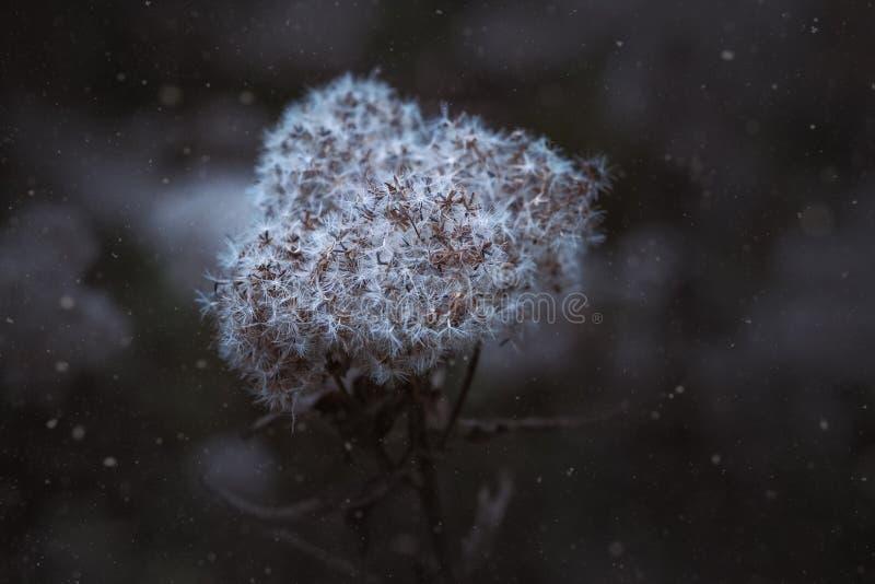 Close-up Of Snow On Tree Free Public Domain Cc0 Image