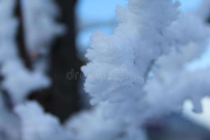 Snow Close Up. A Close up of snow on a tree branch royalty free stock image