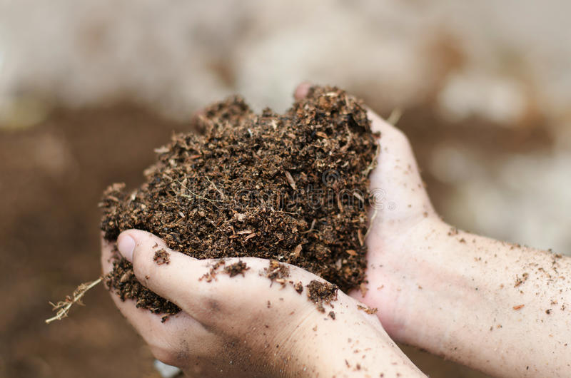 Close up of Soil. In farmer arms royalty free stock photo
