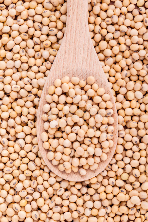 Close Up soy beans in wooden spoon and soy beans . royalty free stock photo
