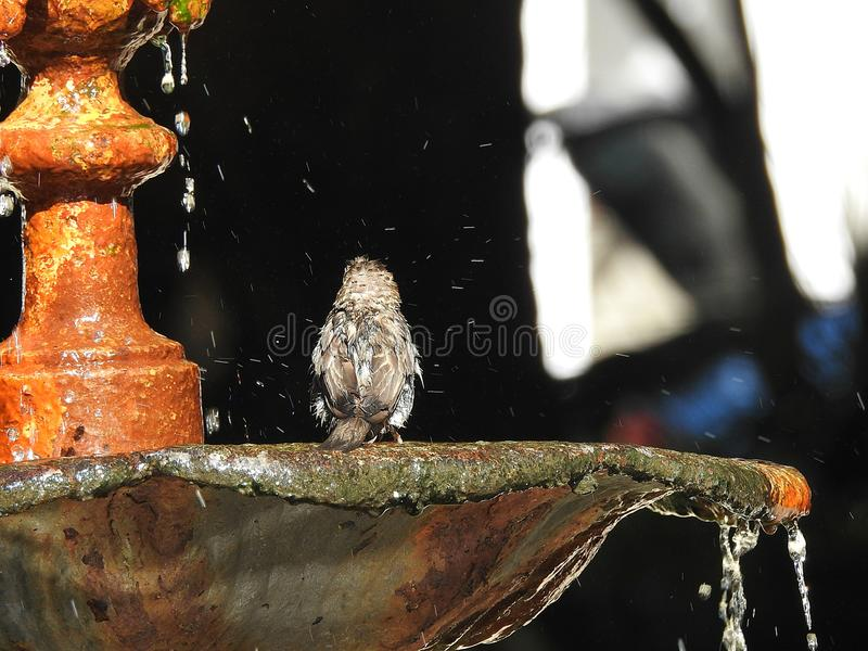 Close up of sparrow royalty free stock images
