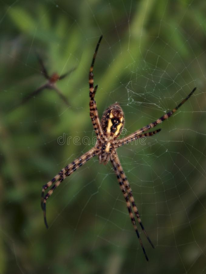 Close up Spider in his home stock photos