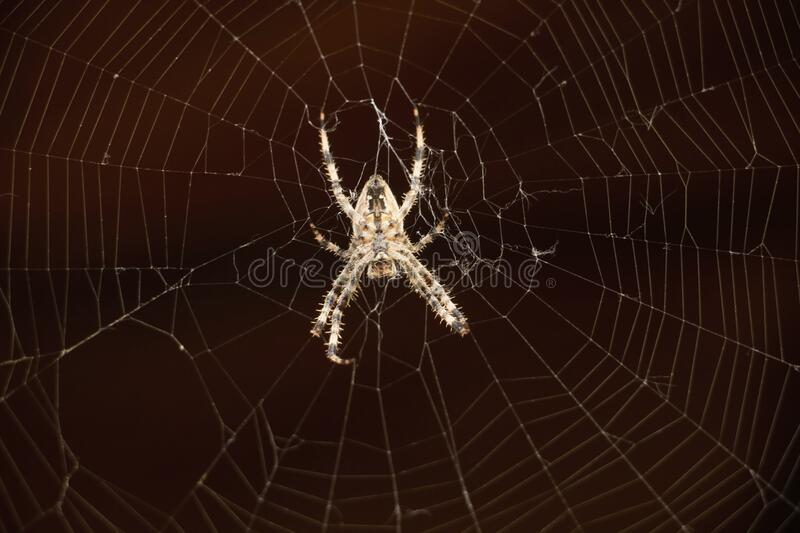 Close-up of spider royalty free stock image
