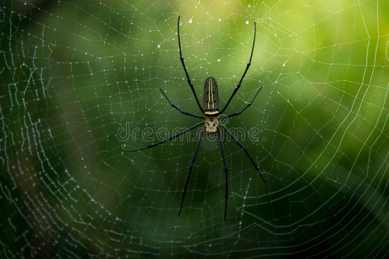 Close up spider in nature. royalty free stock image