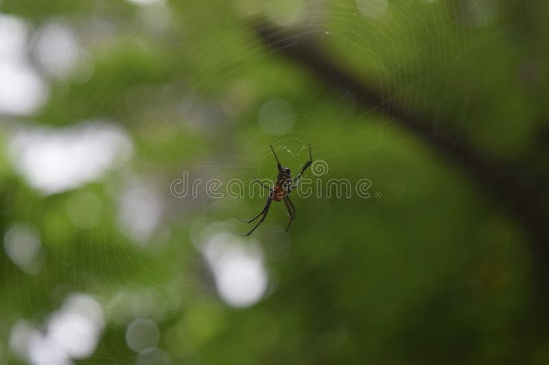Close up spider in the nest royalty free stock photos