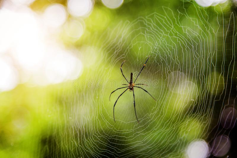 Spider on net with blur green bokeh background royalty free stock image