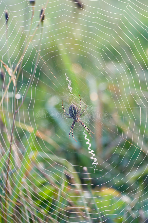 Download Close-up spider web stock image. Image of natural, morning - 6365387