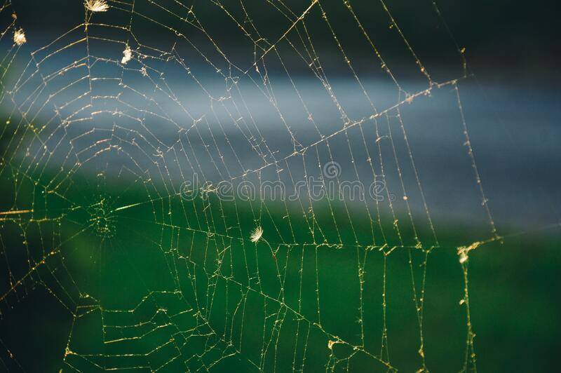 Close Up Of Spider Web Free Public Domain Cc0 Image