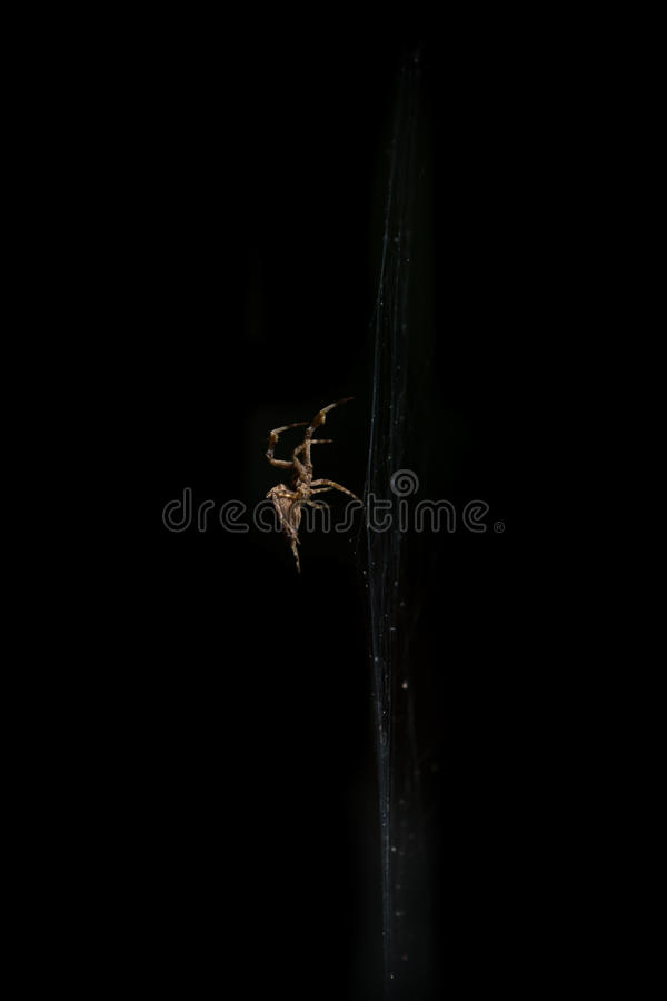 Close up spider in web isolated black royalty free stock photo