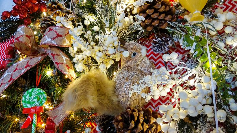 Close up of squirrel on christmas tree. Winter time stock photography