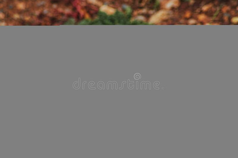 Close-up of Squirrel on Field stock image