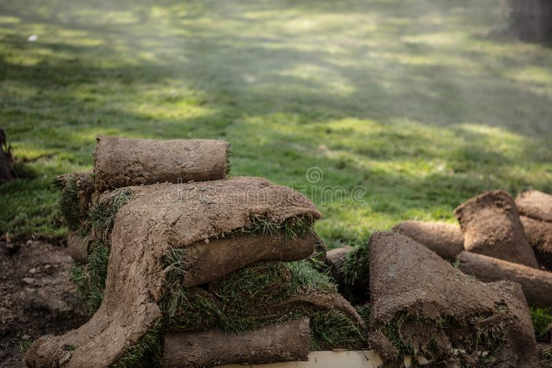 Close up on stacking turf sod carpet roll. Grass Turfs Rolls On The wooden Pallet Preparing To New Grass Installation On Foggy Background royalty free stock photography