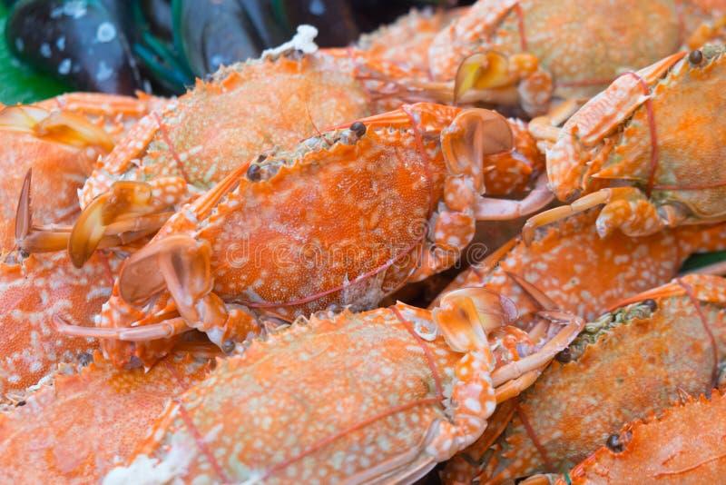 Steamed sea fresh crab stock photos