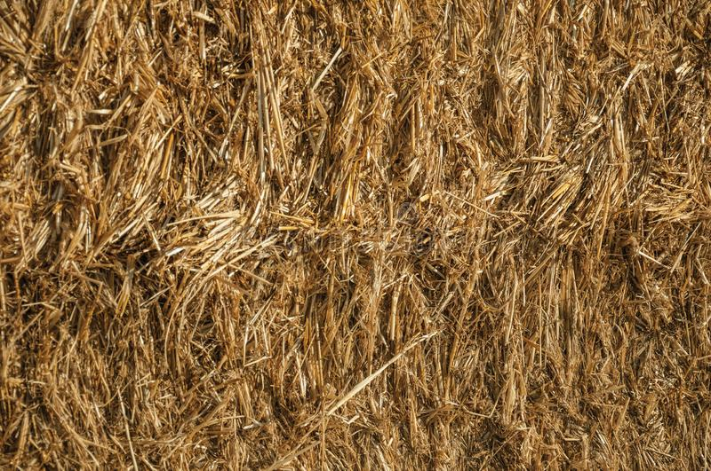 Close-up of Straw from a hay bale in a farm. Close-up of straw from a hay bale at sunset making a quaint pattern, in a farm near Elvas. A gracious star-shaped royalty free stock photos