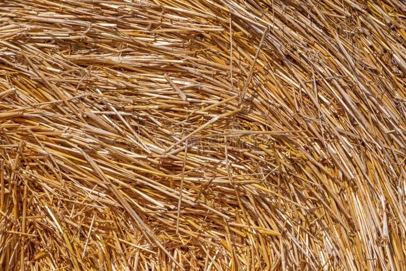 Straw in stack stock photo