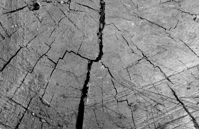 Close-up sujo velho do corte da árvore em preto e branco foto de stock royalty free
