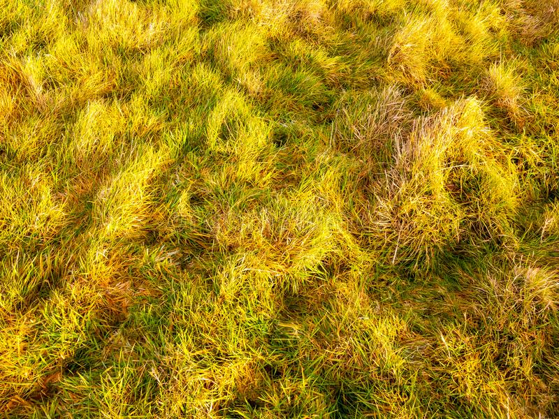 Close up of sun lit green grass summer spring autumn winter ground country. Essex; england; uk stock image