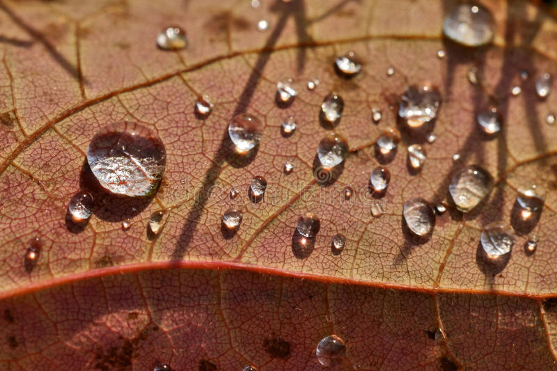 Close up super macro shot water drop on leaf and flower royalty free stock photography