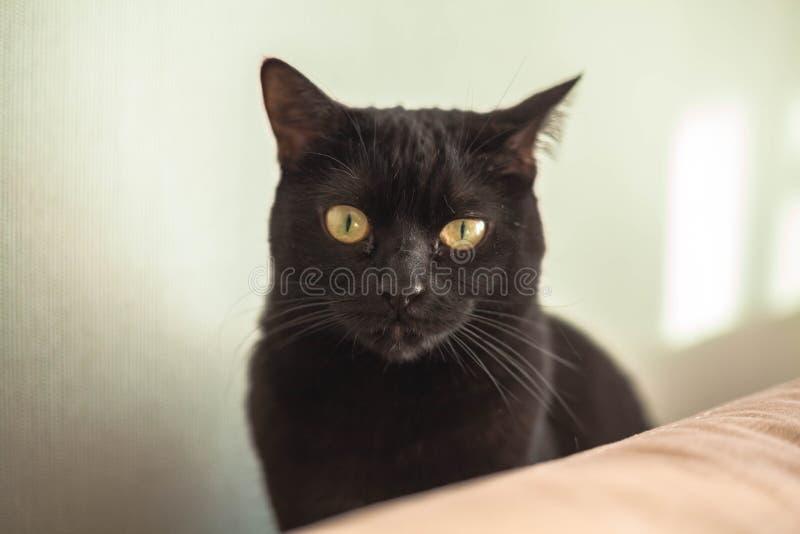 Close-up surpreendido disperso novo do gato dos olhos Gato novo que olha surpreendido e assustado fotos de stock