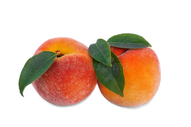 Close-up of sweet bright peaches, on a white background. Two ripe, nutritious, beautiful fruits. A healthful breakfast. Close refreshing whole peaches with royalty free stock photos