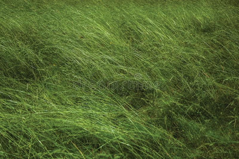 Close-up of tall green bushes on sunny day stock photos