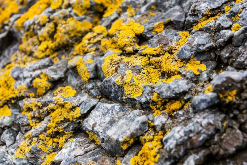 Macro texture coastal cliffs. Yellow Sea worn rock texture isolated. royalty free stock images