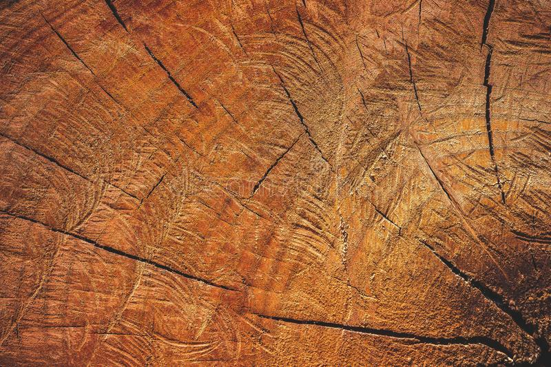 Close up texture of cutting timber by chainsaw. Concept campaign of Global warming and forest preservation stock image