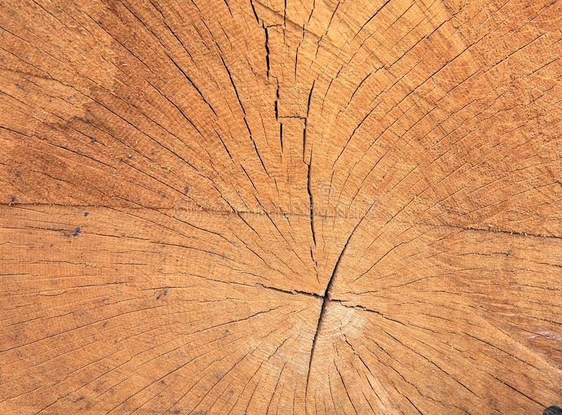 Close up texture of old sawn wood with annual rings. Brown wooden cross section natural pattern royalty free stock images