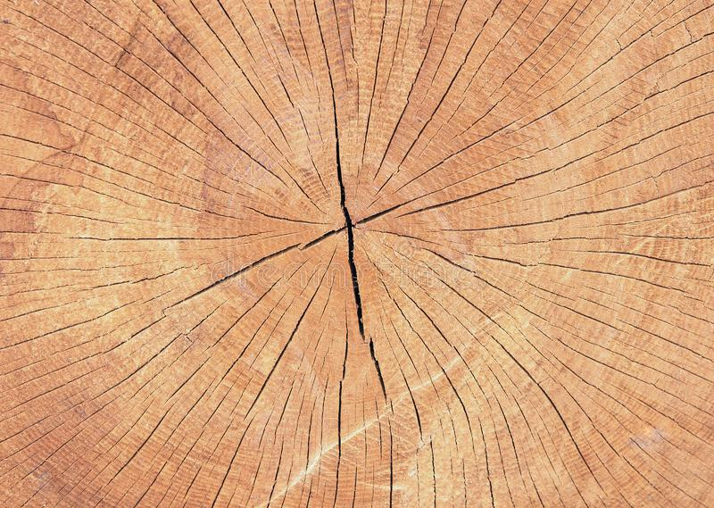 Close up texture of old sawn wood with annual rings. Brown wooden cross section natural pattern stock image