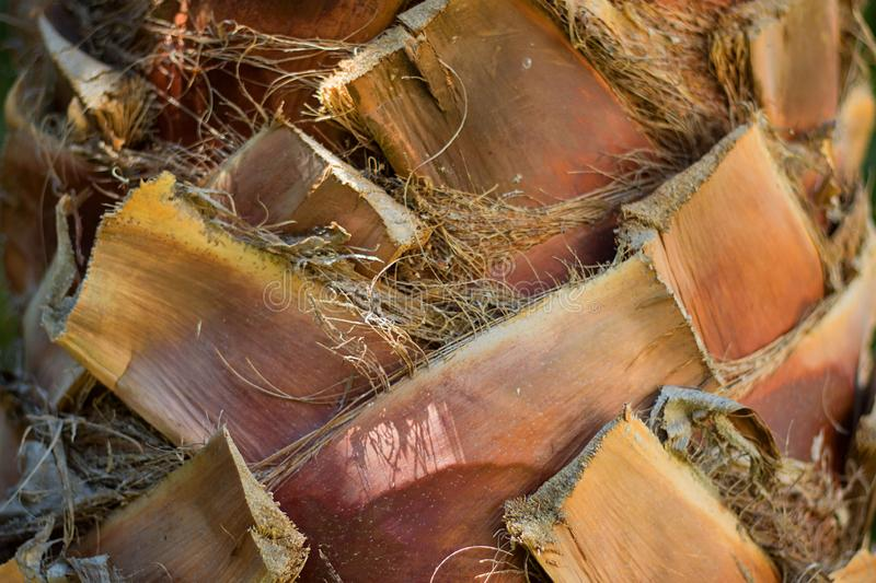 Close up texture of orange pastel colored tropical palm tree trunk stock photo