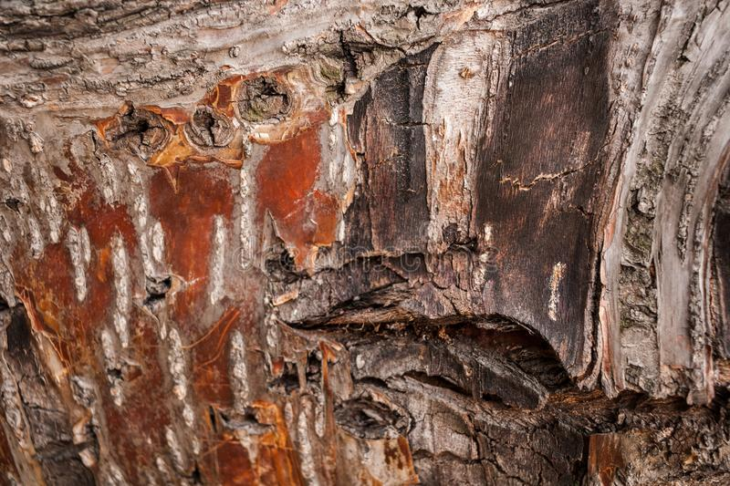 Close-up textured rough and rugged brown-red tree bark as background. Selective focus stock photography