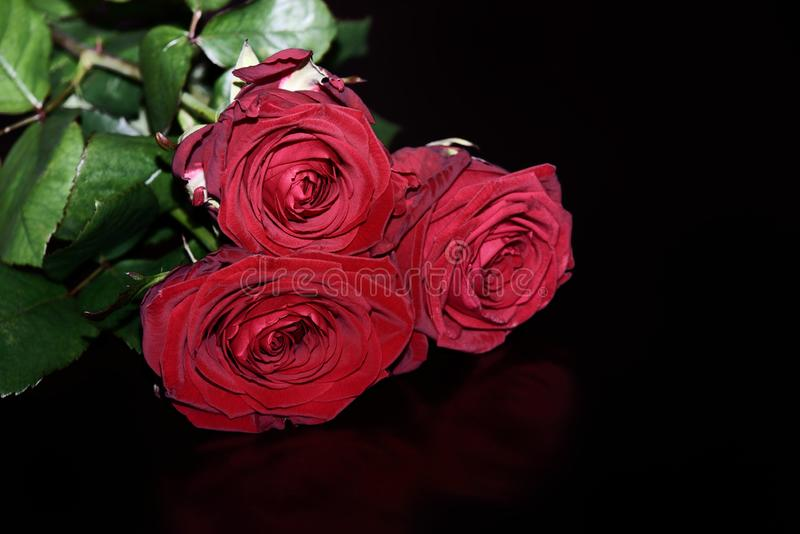 Close-up of three red roses on black background stock photo
