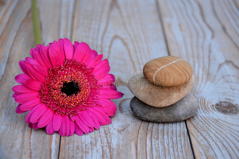 Close up of Three zen stones with pink gerber daisy on used wood stock image