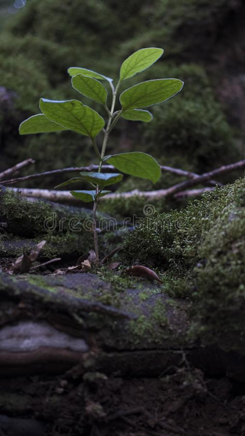 Close-up to ground level of a small plant growing through the rocky soil stock photography