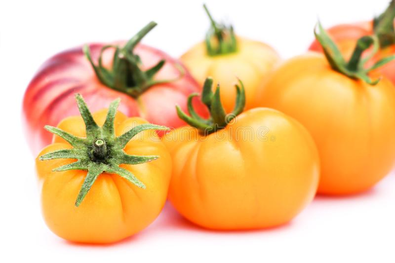 Close up of Tomato varieties of Blue beauty and brandywine yellow. Very rich on anti-oxydants, isoated on white background with copy space for text, message and royalty free stock image