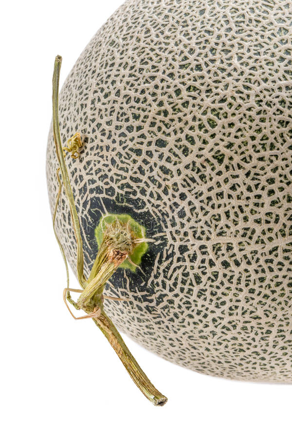 Close up the top of Hamigua melon sweet cantaloupe melon isola. Ted on white background royalty free stock images