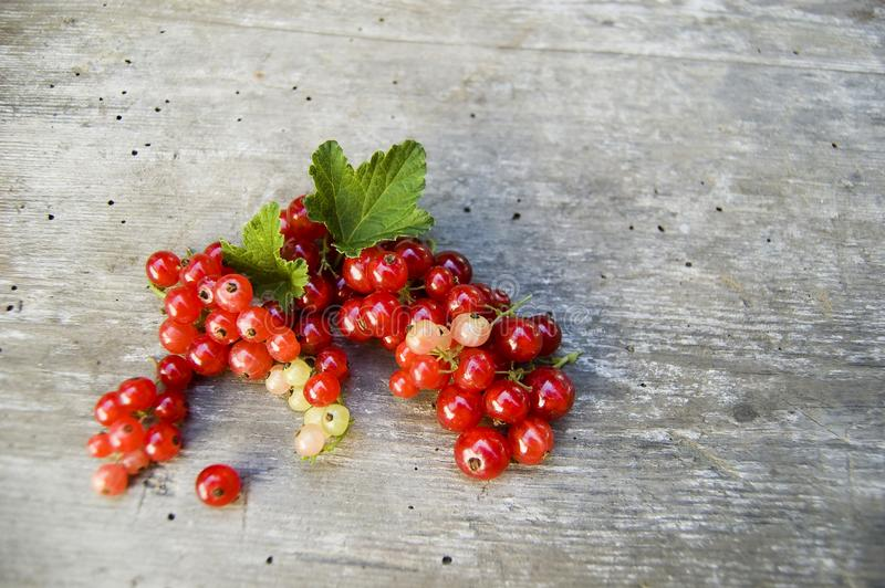 Close up, top shot of fresh harvested redcurrant on rustic wooden table background, selective focus, space for text stock images