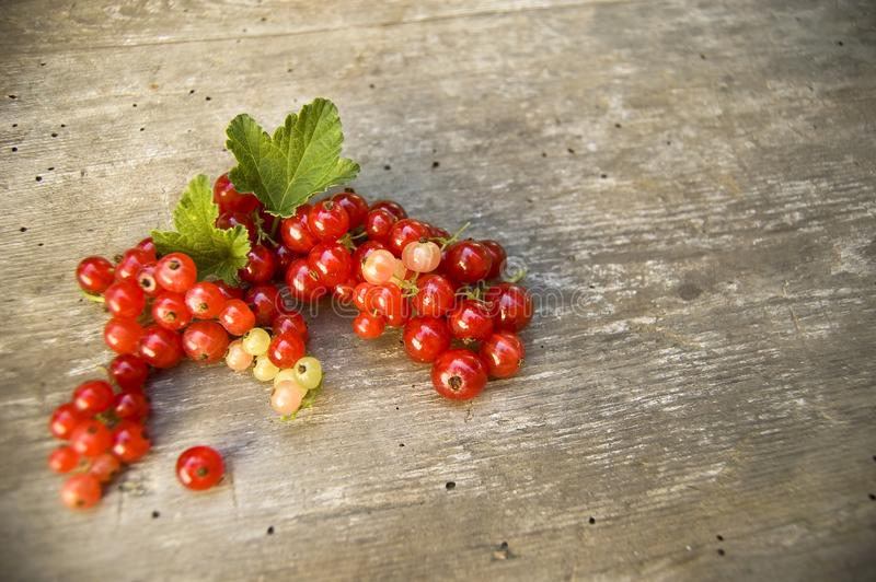 Close up, top shot of fresh harvested redcurrant on rustic wooden table background, selective focus, space for text royalty free stock photos