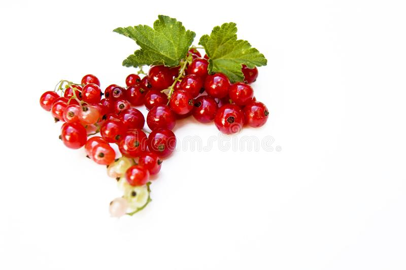 Close up, top shot of fresh harvested redcurrant on white background, selective focus, space for text, isolated stock photos
