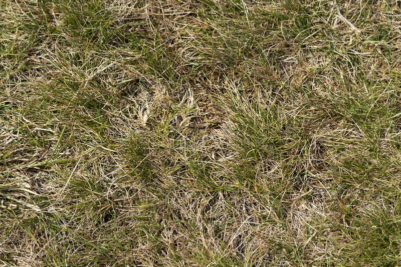 Close up top view abstract picture of weathered dry yellow wild grass field with some green blades on sunny spring or summer day. stock photos