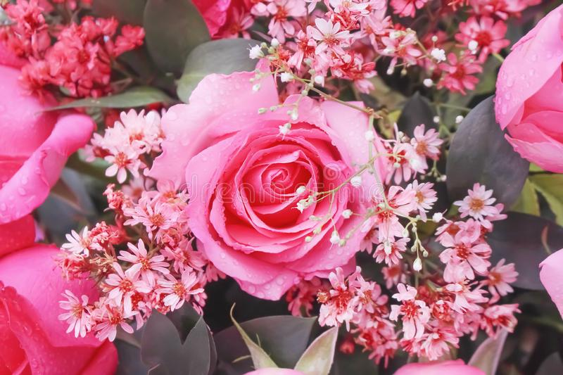 Top view colorful bouquet of pink rose flowers blooming with water drops texture for background. Close up Top view colorful bouquet of pink rose flowers blooming royalty free stock image