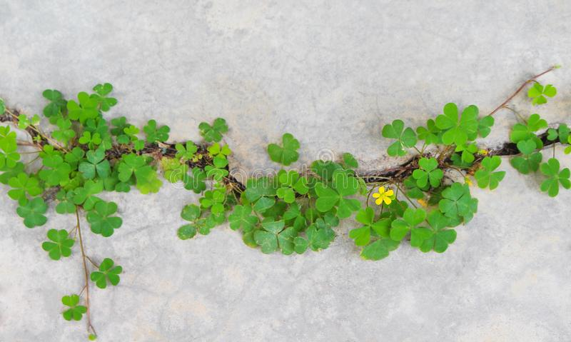 Top view colorful green plants with yellow flower patterns growing in concrete cracks floor, nature background. Close up Top view colorful green plants with royalty free stock image