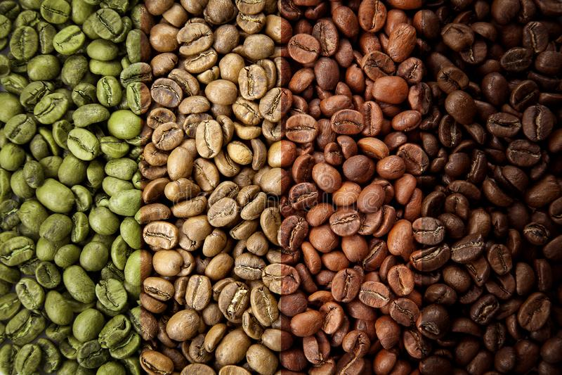 A collage of coffee beans showing various stages of roasting from raw through to Italian roast. stock photography