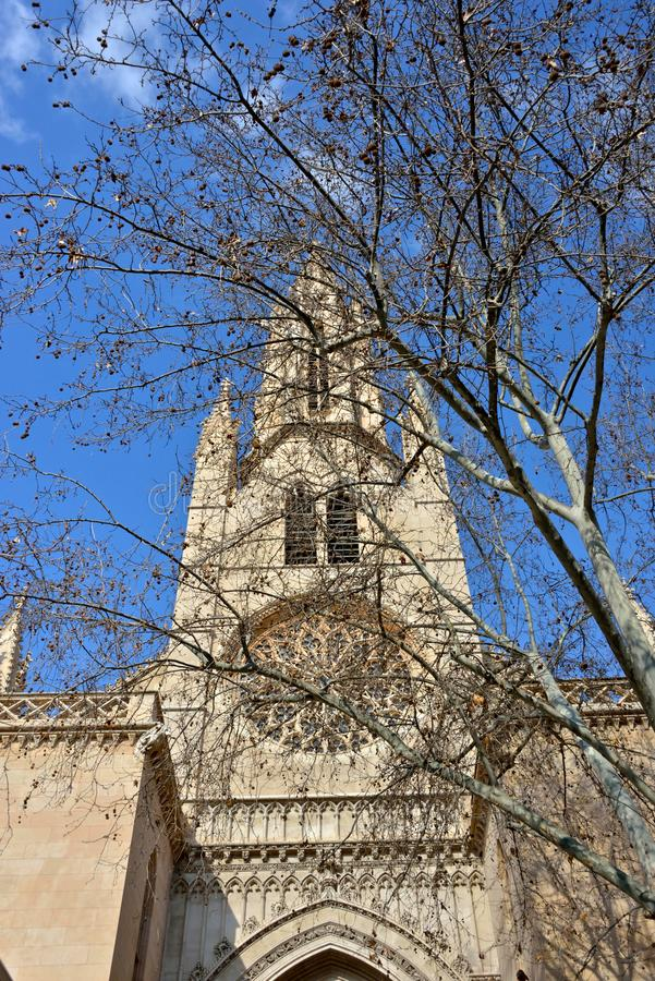 Tower of Saint Eulalia church behind brunches stock images