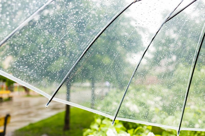 Close up Transparent Umbrella with water drops during the rain with green leaves tree on the blur background. Rainy weather royalty free stock photography