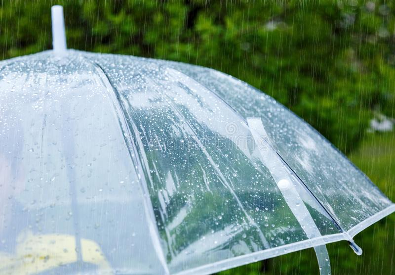 Close up Transparent Umbrella with water drops during the rain with green leaves tree on the blur background. Rainy weather royalty free stock photo