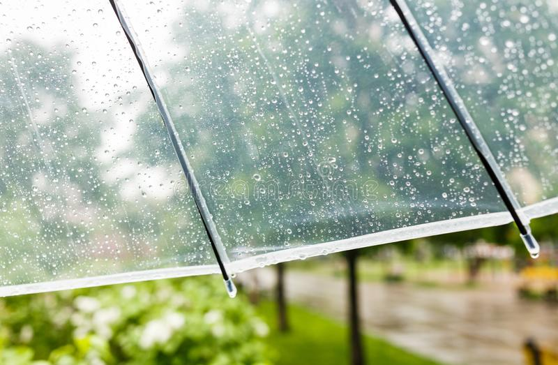 Close up Transparent Umbrella with water drops during the rain with green leaves tree on the blur background. Rainy weather stock images
