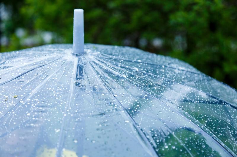 Close up Transparent Umbrella with water drops during the rain with green leaves tree on the blur background. Rainy weather. At spring, summer stock photo